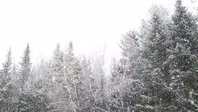 Śnieg spada od nieba zbiory