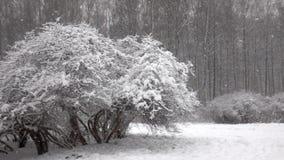 Śnieg spada przed lasem zbiory