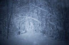 Śnieg spada w ciemnych zim drewnach obrazy royalty free