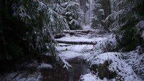 Śnieg spada w lesie z drzewami Intensywny śnieg natychmiast zakrywa powierzchnię gałąź i las zdjęcie wideo