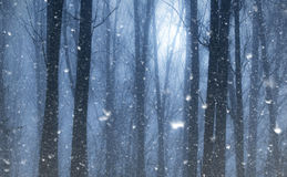 Śnieg spada w tajemniczym dzikim lesie obraz royalty free