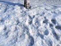 Śnieg topi w słońcu zdjęcia stock