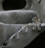 śnieg w cętki Obrazy Royalty Free