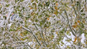 Śnieg w drzewie zdjęcie wideo