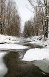 Śnieg w lesie obraz royalty free