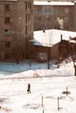 Śnieg w mieście Obraz Stock