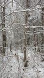 Śnieg w południe Fotografia Stock