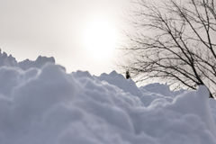 Śnieg z Mgławym światłem słonecznym Behind Obrazy Royalty Free