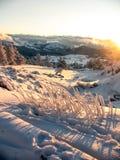 Śnieg zakrywać góry z wzgórze zakrywającym jedliny zimy gór lasowym krajobrazem fotografia royalty free