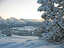 Śnieg zakrywać góry z wzgórze zakrywającym jedliny zimy gór lasowym krajobrazem fotografia stock