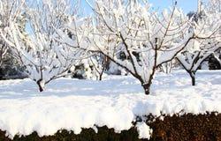 Śnieg zakrywać rośliny i drzewa Zdjęcie Stock