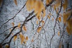Śnieg Zakrywać zim gałąź Obrazy Royalty Free