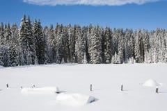 Śnieg zakrywał łąkę z drzewami w tle fotografia stock
