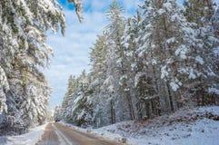 Śnieg zakrywał drewna - piękni lasy wzdłuż wiejskich dróg fotografia stock