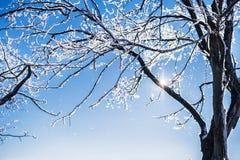 Śnieg zakrywał drzewa na jasnym mroźnym dniu Fotografia Royalty Free