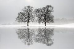 Śnieg zakrywał drzewa odbijających w jeziorze fotografia stock