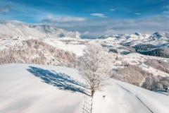 Śnieg zakrywał drzewa po ciężkiego opad śniegu w górskiej wiosce Sirnea blisko otręby i Brasov, Transylvania, Rumunia zdjęcia royalty free
