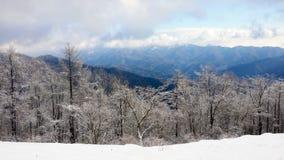 Śnieg zakrywał drzewa przeciw odległym pasma górskiego & burzy chmurom fotografia stock