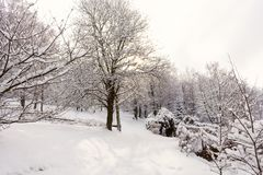 Śnieg zakrywał drzewa w zima lesie przy słonecznym dniem Piękny zimy landscape Zdjęcia Royalty Free