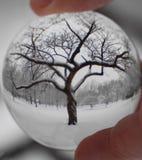 Zimy drzewo przez Szklanego Sphe Obraz Royalty Free