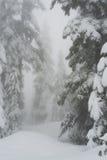 Śnieg zakrywał drzewa wzdłuż snowshoeing śladu na Cyprysowej górze Zdjęcia Royalty Free