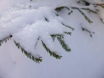 Śnieg zakrywał gałąź świerczyna w lesie w zimnej zimie obraz stock