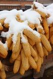 Śnieg zakrywał kukurudze wiesza na dachu w wsi Fotografia Stock