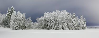 Śnieg zakrywał las i zamarzniętego jezioro przy nocą Obraz Royalty Free
