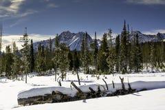 Śnieg zakrywał las w Idaho z pięknymi górami Fotografia Stock