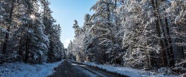 Śnieg zakrywał sosny - piękni lasy wzdłuż wiejskich dróg Zdjęcia Royalty Free