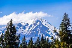 Śnieg zakrywał szczyt obramiającego wiecznozielonymi drzewami na pogodnym letnim dniu Shasta góra, północny Kalifornia obraz stock