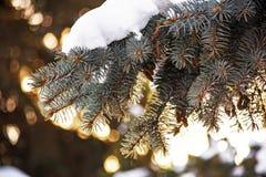 Śnieg zakrywająca świerczyny gałąź z bokeh tłem Zdjęcia Stock