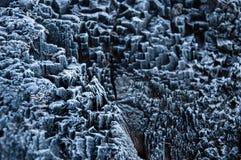 Śnieg zakrywająca drzewnego bagażnika czarny i biały tekstura Fotografia Royalty Free
