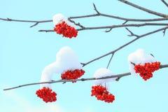 Śnieg zakrywająca góra ashberry Obrazy Royalty Free