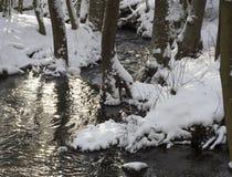 Śnieg zakrywająca las wody strumienia zatoczka z drzewami, rozgałęzia się i kamienie, idylliczny zima krajobraz w złotym godziny  zdjęcia stock