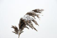 Śnieg zakrywająca płocha Obraz Stock