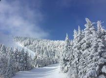 Śnieg zakrywający Zdjęcie Royalty Free