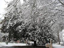 Śnieg zakrywający Obrazy Royalty Free