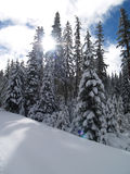 Śnieg Zakrywający Drzewa obraz royalty free
