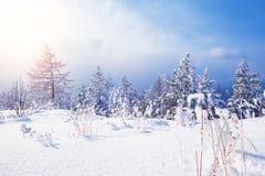 Śnieg zakrywający drzewa w górach Fotografia Stock
