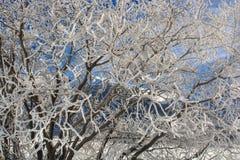 Śnieg Zakrywający Drzewny HDR zdjęcia royalty free