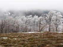 Śnieg zakrywający jedlina las na wzgórzach bansko Bulgaria krajobrazowa gór zima obrazy stock