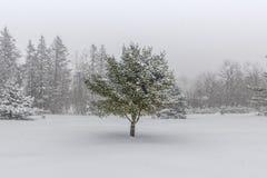 Śnieg Zakrywający krajobraz z Centrowaną sosną Fotografia Royalty Free