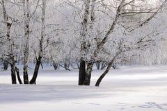 Śnieg zakrywający mroźny las Zdjęcie Stock