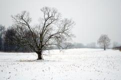 Śnieg zakrywający pole Fotografia Royalty Free