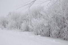 Śnieg, zima, biel, światło, natura, puszysty, drogowy, drzewa i krzaki Fotografia Stock