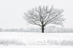 Śniegi Gromadzący się drzewa fotografia stock