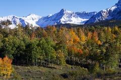 Śniegi Nakrywający szczyty i Złota osika w Południowo-zachodni Kolorado Obrazy Royalty Free