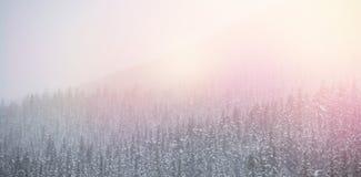 Śniegi zakrywający drzewa podczas zimy ilustracji
