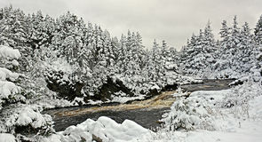 Śniegi zakrywający drzewa w Kanada fotografia royalty free